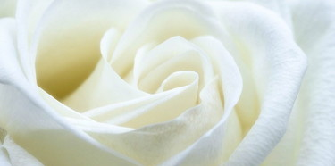 albaflos-rose
